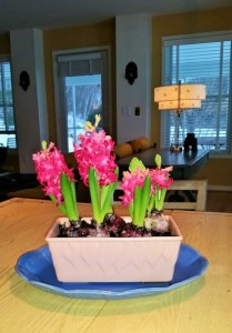 Spring in a pink pot (2)