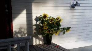 sunflowers-on-the-porch